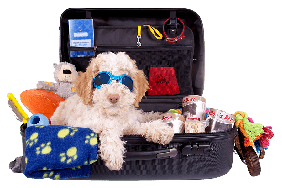 Dog leaving home in a suitcase with pet supplies