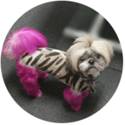 Stencil Grooming for dogs Colored Grooming3